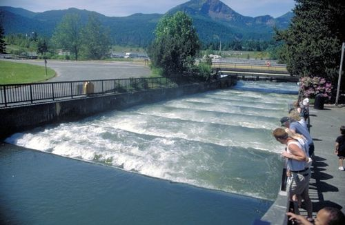 Bonneville Dam fish ladder/Photo: Bonneville Power Administration