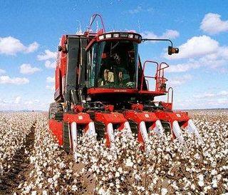 Harvesting-Cotton-Gunnedah